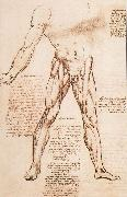 LEONARDO da Vinci Muscle structure of the thigh oil painting picture wholesale